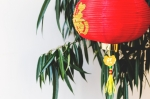 red-lantern-in-tree.jpg